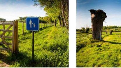 Twee nieuwe trage wegen tussen Disveld en Vorte Bossen