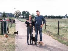 Chihuahua Aapie nog steeds niet gevonden: 'De honden voelen voor ons als kinderen'