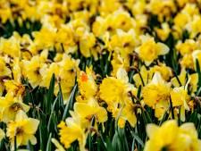 Topjaar voor exporteurs van bloemen en planten: miljarden aan bloemen en planten grens over