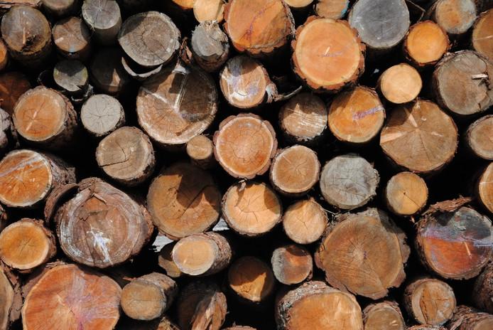 Het belangrijkste argument voor vier Kempengemeenten om niet te investeren in een biomassacentrale is de beperkte opbrengst die met bio-energie gegenereerd kan worden.