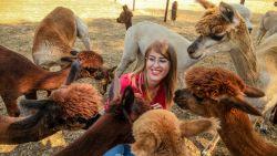 Uitgetest: ontstressen met alpaca's