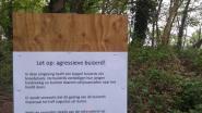 Wandelaars en joggers, opgelet: agressieve buizerd!