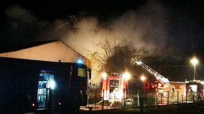 Zeven koeien sterven in zware brand op hoeve