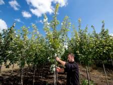Tuinbouw zoekt vernieuwing op