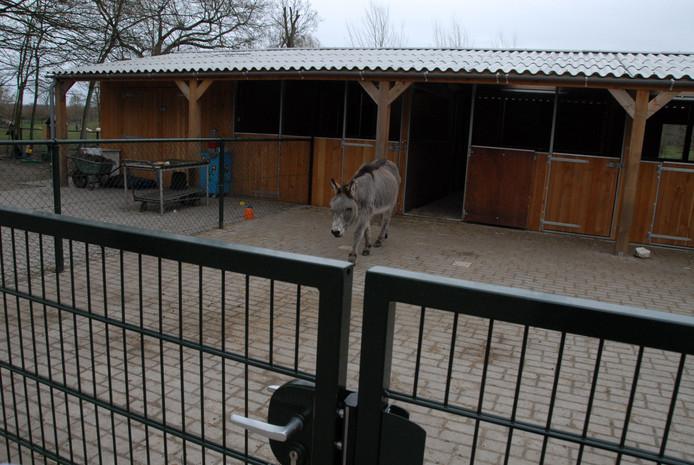 De 36-jarige Donkey is tevreden met de nieuwe stal.