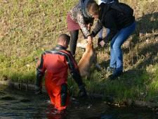 Brandweer redt hond uit water bij het Wilgenhaantje in Deventer