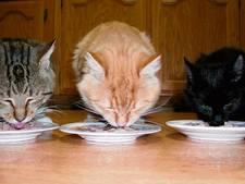Meer geld nodig voor behoud asiel de Kattenmand