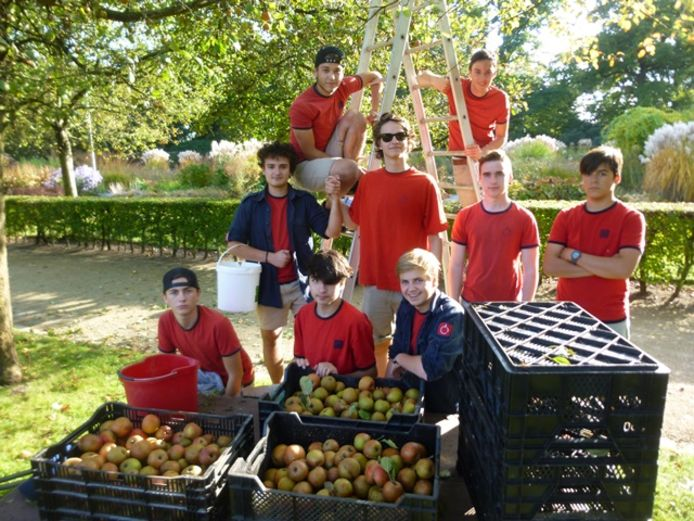 De appelenpluk in het kader van Fruit in de wijk.