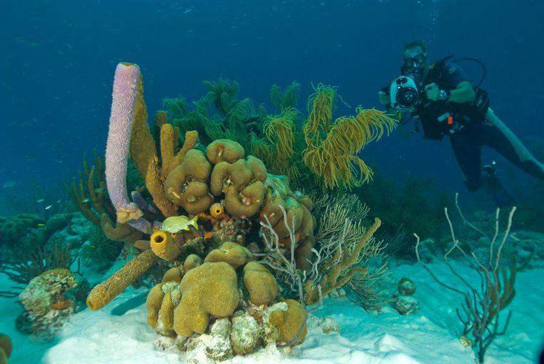 Koraal bij Bonaire. Beeld Bonaire Dos en Bertie Winkel WWF