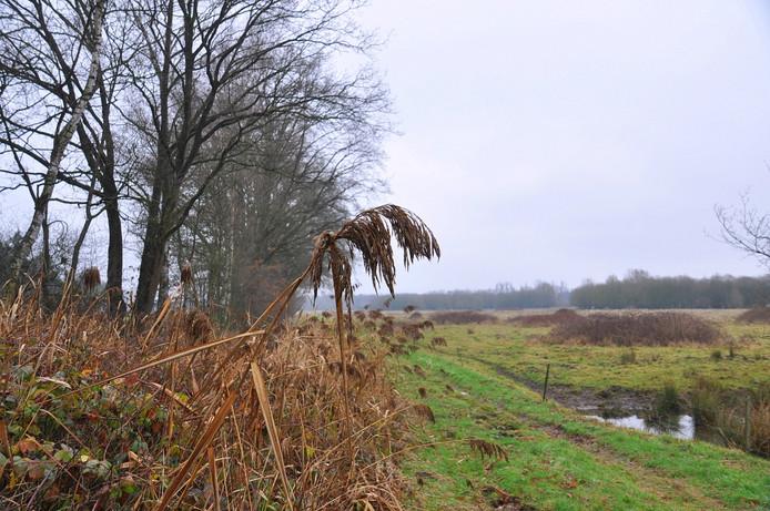 deze donderdag verliep zonloos en troosteloos grijs in zuidoost Brabant!