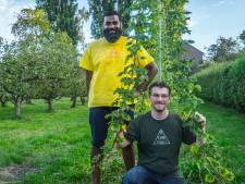 Bierfanaten Loek en Viresh halen brouwerij naar de stad: 'Echte Zoetermeerse bieren, met hop van eigen bodem'