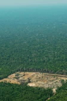 Red het oerwoud: Frankrijk boycot producten die worden gelinkt aan houtkap