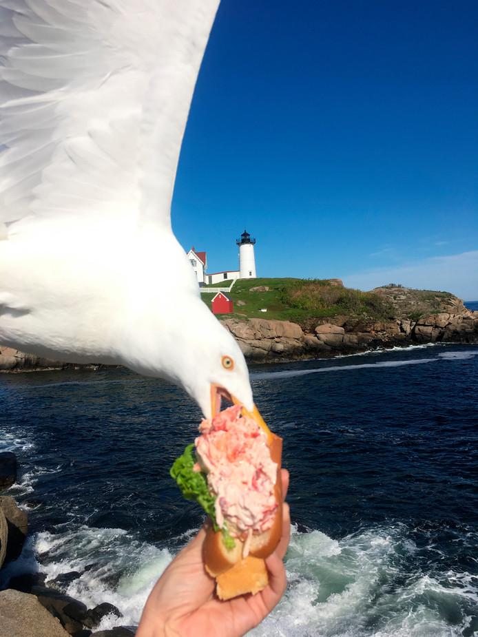 Elle voulait une photo de son sandwich au homard avec le Nibble Lightouse, elle a eu presque mieux