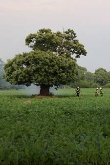 Bliksem is kort maar hevig: bomen breken, boerderij in brand én mooie beelden