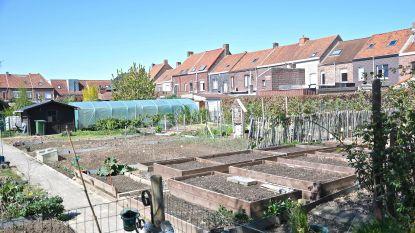 Volkstuintjes in Geluwe komen waarschijnlijk in Wervikstraat