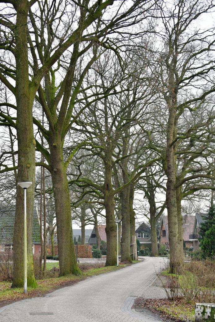 Bomen aan Gondalaan die worden gekapt