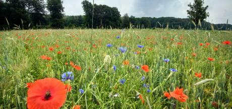 Boer praat voortaan over bloemetjes en bijtjes in plaats van koetjes en kalfjes