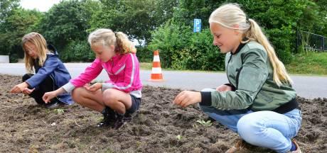 West Betuwe moet bijvriendelijker worden: kinderen zaaien veldbloemen in