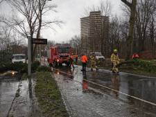 Boom waait om in Wageningen, weg tijdelijk afgesloten