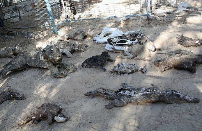 Les corps éparpillés d'animaux morts, parfois momifiés, dans le zoo de Khan Younès.