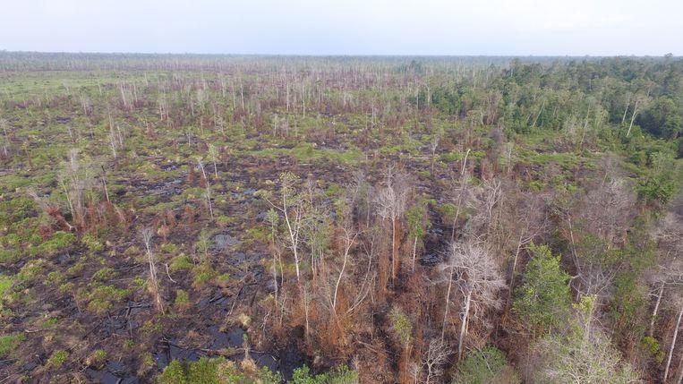 Borneo Beeld Narasi/SaveOurBorneo