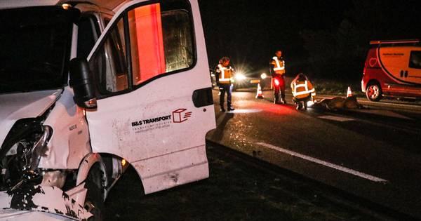 Drachtig hert overleeft botsing in Uddel niet, chauffeur raakt gewond.