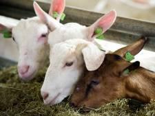 Varkensboer vangt bot: Uden mocht omzetting naar geiten afwijzen