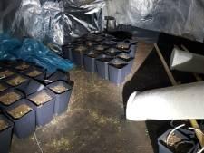 Wietcriminelen harder aangepakt: 'Ze deinzen nergens voor terug, ook niet voor gedoe met wapens'