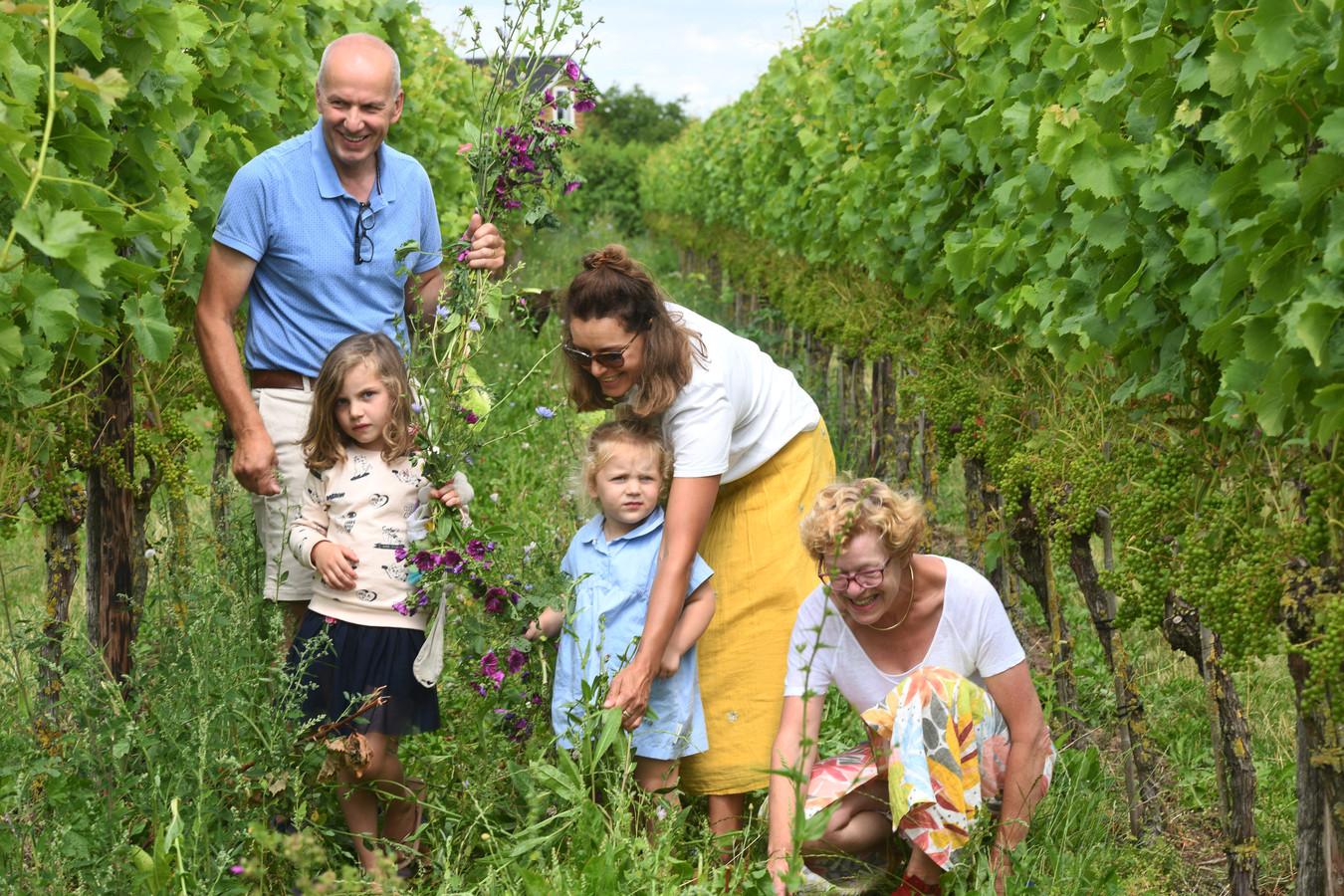 Samen bloemen plukken tussen de wijnranken van het Betuws Wijndomein.