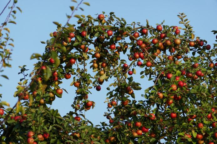 In het verleden was een fruitteeltbedrijf gevestigd aan de Bornhemweg in Oudenbosch waar chemische bestrijdingsmiddelen werden gebruikt. Om die reden laat de gemeente aanvullend bodemonderzoek doen.