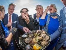 'Zeeuwse oesters zijn dit jaar vlezig en smaken heerlijk'