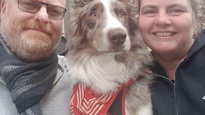 """Minister Weyts verstrengt voorwaarden voor hondenkwekerijen: """"Maar het moet nog strenger"""""""