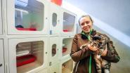 55 katten weggehaald bij vrouw, 19 noodgedwongen geëuthanaseerd: dieren leefden in vogelkooien en hadden kattenaids