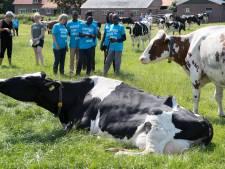 Marathonlopers uit Kenia kijken ogen uit in Salland: Met zóveel koeien ben je rijk?!