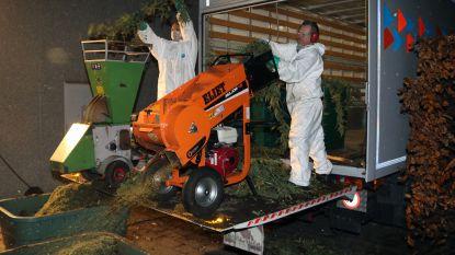 Brand legt 6.500 cannabisplanten bloot: familie achter plasticbedrijf riskeert tot 6 jaar cel