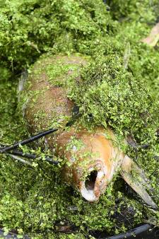 Baggeren in vijvers Grave loopt vast: grotere kans op overstromingen en vissterfte