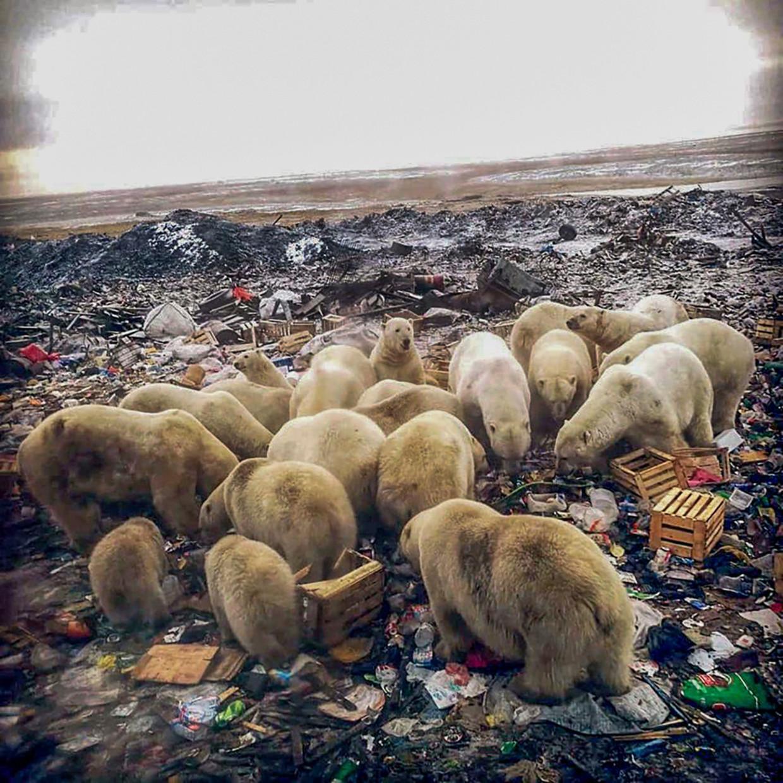 In de nederzetting Beloesja Goeba op Nova Zembla zijn er al mensen aangevallen door de ijsberen.