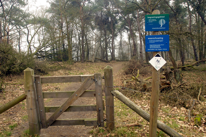 Wandelen en tegelijk zwerfvuil opruimen in natuurgebied de Borkeld.
