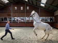Filmsterren komen uit manege in Emmeloord: 'Fantastisch om een paard terug te zien'