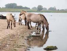 Giftig water: honden mogen het niet drinken, paarden doen het wel
