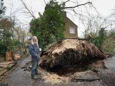 Echtpaar sliep na storm onder dak met omgevallen boom erop