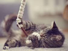 Apenkooi voor kittens bij het Dierenasiel Walcheren