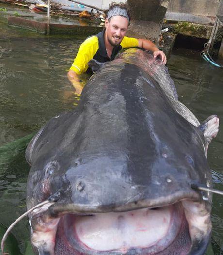 Visser haalt monsterlijk grote meerval van 2,40 meter uit Seine in Parijs