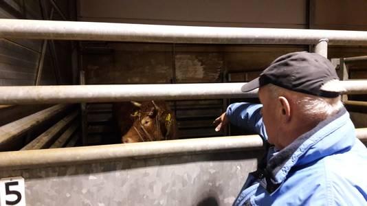 Eigenaar Herman Jansen en zijn koe Hermien. Maandag gaat het dier naar een rusthuis.