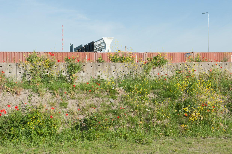 Nabij de Zeeburgertunnel is een wand aangebracht voor oeverzwaluwen. In de gaten maakt de zwaluw zijn nest. Beeld Ko Hage