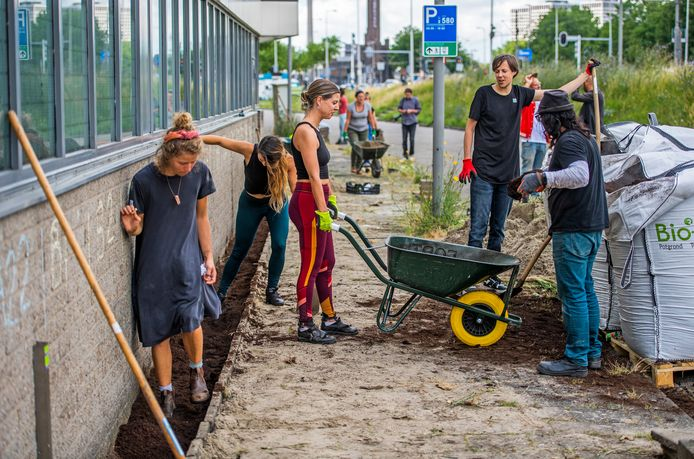 Dertig vrijwilligers legden zaterdag in de Rotterdamse wijk Schiemond de langste geveltuin van Nederland aan.