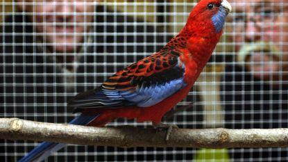 Vogelvrienden vieren vijftigste verjaardag met vogeltentoonstelling