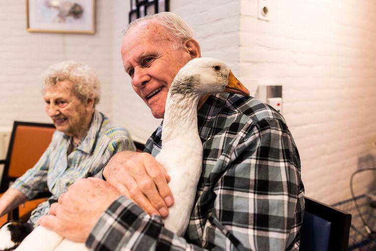 Theo Rietveld, met naast hem Ria Glazer, knuffelt een gans. 'Ik heb liever iets groots op mijn schoot.' Beeld Tammy van Nerum