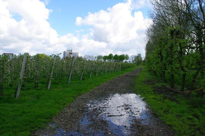 Fruitbomen in Helmond.