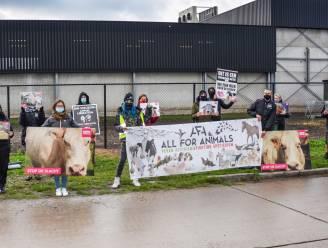 Dierenrechtenorganisaties voeren actie aan slachthuis Moerbeko en eisen sluiting na undercoverbeelden van hardhandige behandeling van schapen